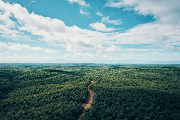 インドネシアで東京都の1.4倍の広さの森林を預かり、紙パルプ事業と植林事業を両立する