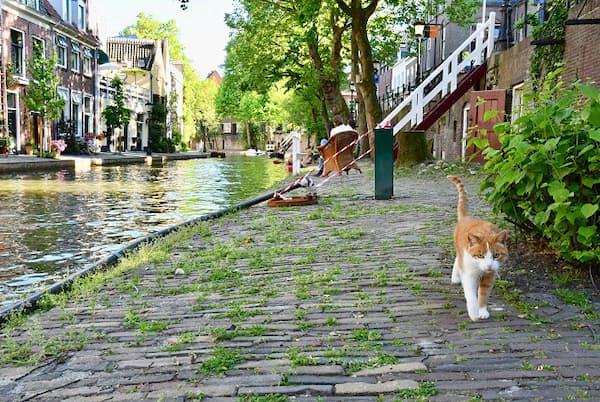 運河沿いを一緒に歩いてくれた白茶トラ猫(オランダ・ユトレヒト)