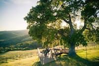 アルタ・コリーナ・ビンヤード&ワイナリーのブドウ園を眺めながらワインを味わう2人。パソロブレスのワイナリーはこの20年間で2倍以上に増加。現在、その数は250を超えている(PHOTOGRAPH COURTESY DAVE BROOKS, ALTA COLINA VINEYARD & WINERY)