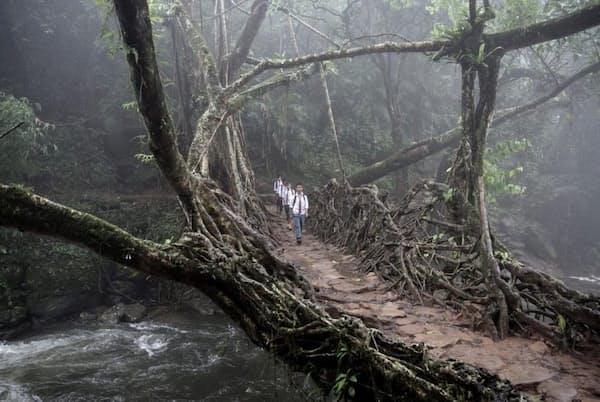 インド、メガラヤ州の東カシ丘陵にある、生きている根の橋を渡る子供たち。こういった橋は、傾斜が激しいこの地域の村をつなぐものとして欠かせない(PHOTOGRAPH BY GIULIO DI STURCO)