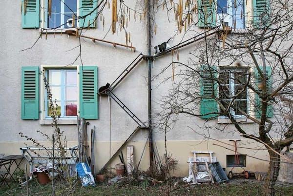 スイスでは、ネコの幸せのためには、外出は不可欠だと考えられており、飼い主が建物の外壁などにネコ用のはしごやスロープを設置している。一方、鳥などの野生生物を守るため、ネコは室内のみで飼うべきだという考え方も広がっている(PHOTOGRAPH BY BRIGITTE SCHUSTER)