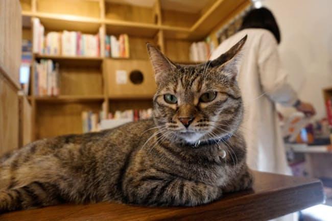 保護猫が店内を自由に動き回るキャッツミャウブックス