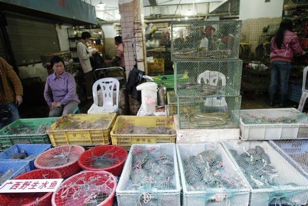 中国、深圳の市場で生きた爬虫類や哺乳類を売る人々。中国では54種の野生動物が食用として合法的に取引されている。新型コロナウイルス感染症の流行は生きた野生動物の取引に世界の目を向けさせた(PHOTOGRAPH BY AFP, GETTY)