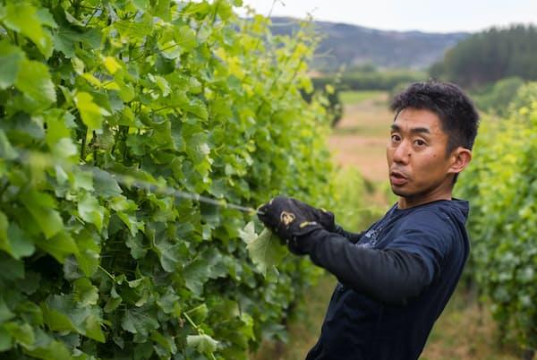 ニュージーランドでワイナリーを開いた小山浩平さん