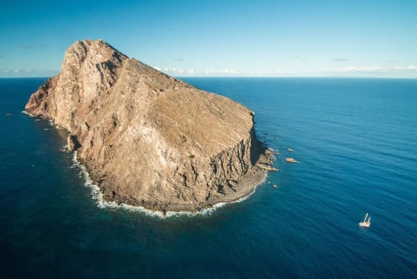ヤギとネズミによって大きく変えられたレドンダ島の自然はかつて再生しないと考えられていた(PHOTOGRAPH BY ED MARSHALL, REDONDA RESTORATION PROGRAMME)