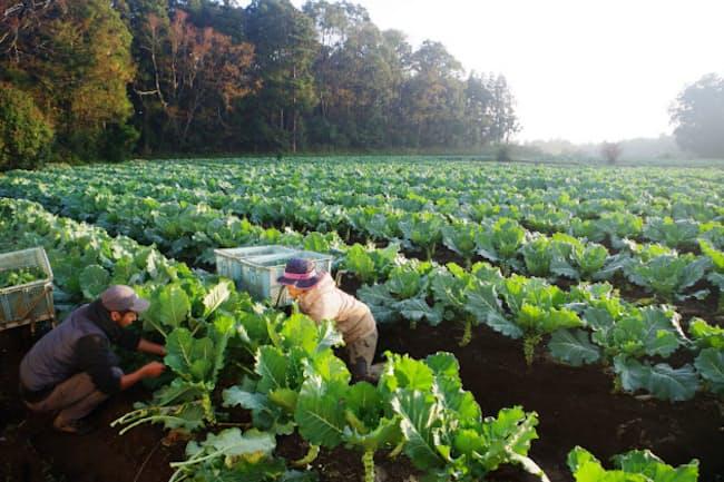 千葉県佐倉市の農場は東京ドームより広い