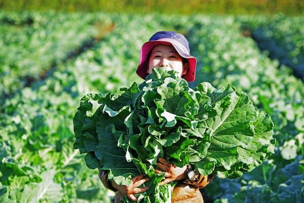 野菜メニュー主体のレストラン「WE ARE THE FARM」の看板食材はケールだ