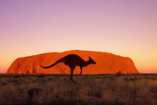 オーストラリア、ウルル=カタ・ジュタ国立公園大地に突き出た赤い一枚岩「ウルル」で名高いウルル=カタ・ジュタ国立公園は、先住民アナング族と、オーストラリア北部準州(ノーザンテリトリー)公園局が共同で管理している。アナング族の聖地であり、エアーズロックとも呼ばれるこの一枚岩に登る旅行者と先住民族との対立が長く続いていた。ウルルへの登山は2019年10月26日に禁止されたが、カタ・ジュタの岩山周辺を歩いて巡ったり、岩絵が残る公園周辺の古代遺跡を訪れたりすることはできる(PHOTOGRAPH BY GRANT FAINT, GETTY IMAGES)