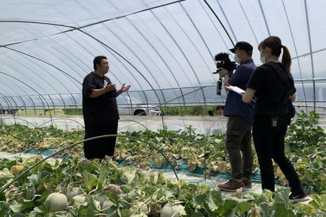 オンラインメロン狩りは茨城県鉾田市のメロン農家で実施された(茨城県提供)