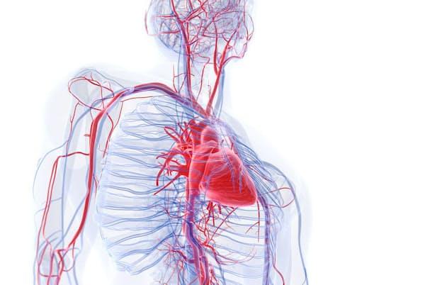 「血管」の健康は、老化や病気のリスクと密接に関わっています。中でも今、大きくクローズアップされているのが「毛細血管」です。(c)Sebastian Kaulitzki-123RF
