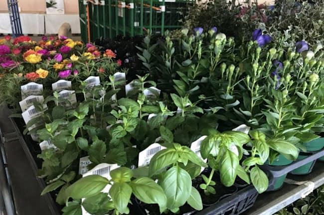 園芸用の鉢物は切り花に比べ需要は底堅いが……