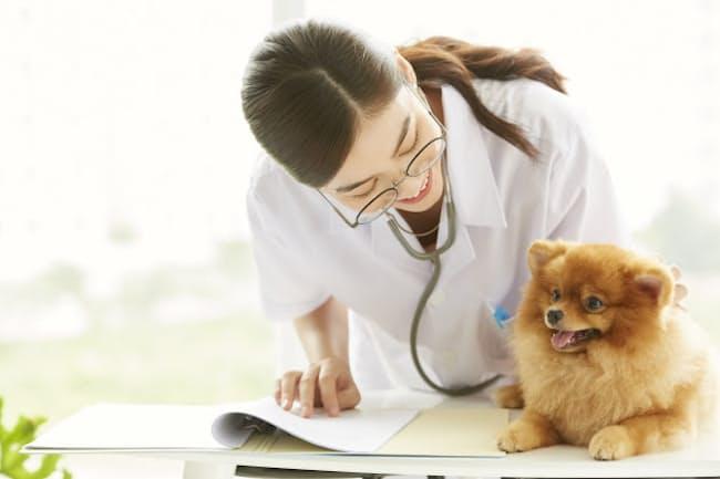ペットの医療保険は商品の仕組みをよく理解してから(写真はイメージ=PIXTA)