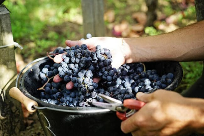 世界の高級ワイン産地のトップに君臨する仏ボルドー(ボルドーワイン委員会提供)