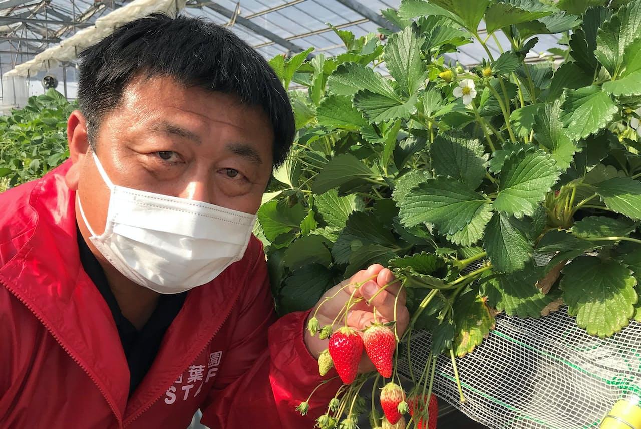 珍しいイチゴ、みつはるを見せる相葉英樹さん