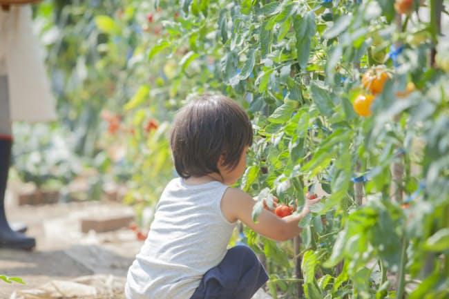 有機農業が農地に占める比率は現状で1%に満たない(写真はイメージ=PIXTA)